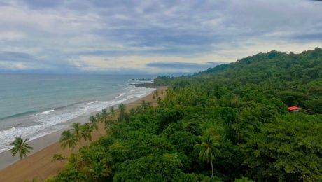 Where the rainforest meets the ocean