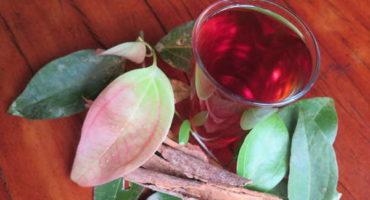 Cinnamon tea ~ freshly harvested